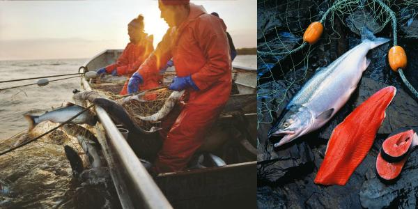 pesca-salmon-salvaje-alaska