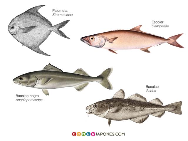 Pez mantequilla qu es y qu no es for Especies de peces