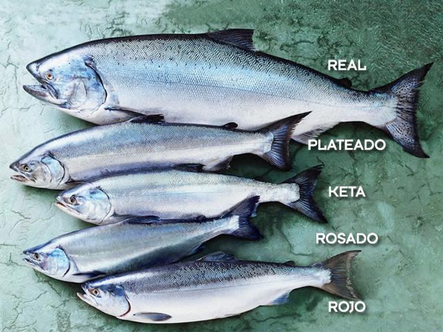 Las cinco especies de salmón salvaje de Alaska, cada una con sus matices en sabor y textura.
